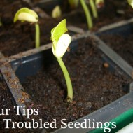 Gardening: Four Tips for Troubled Seedlings