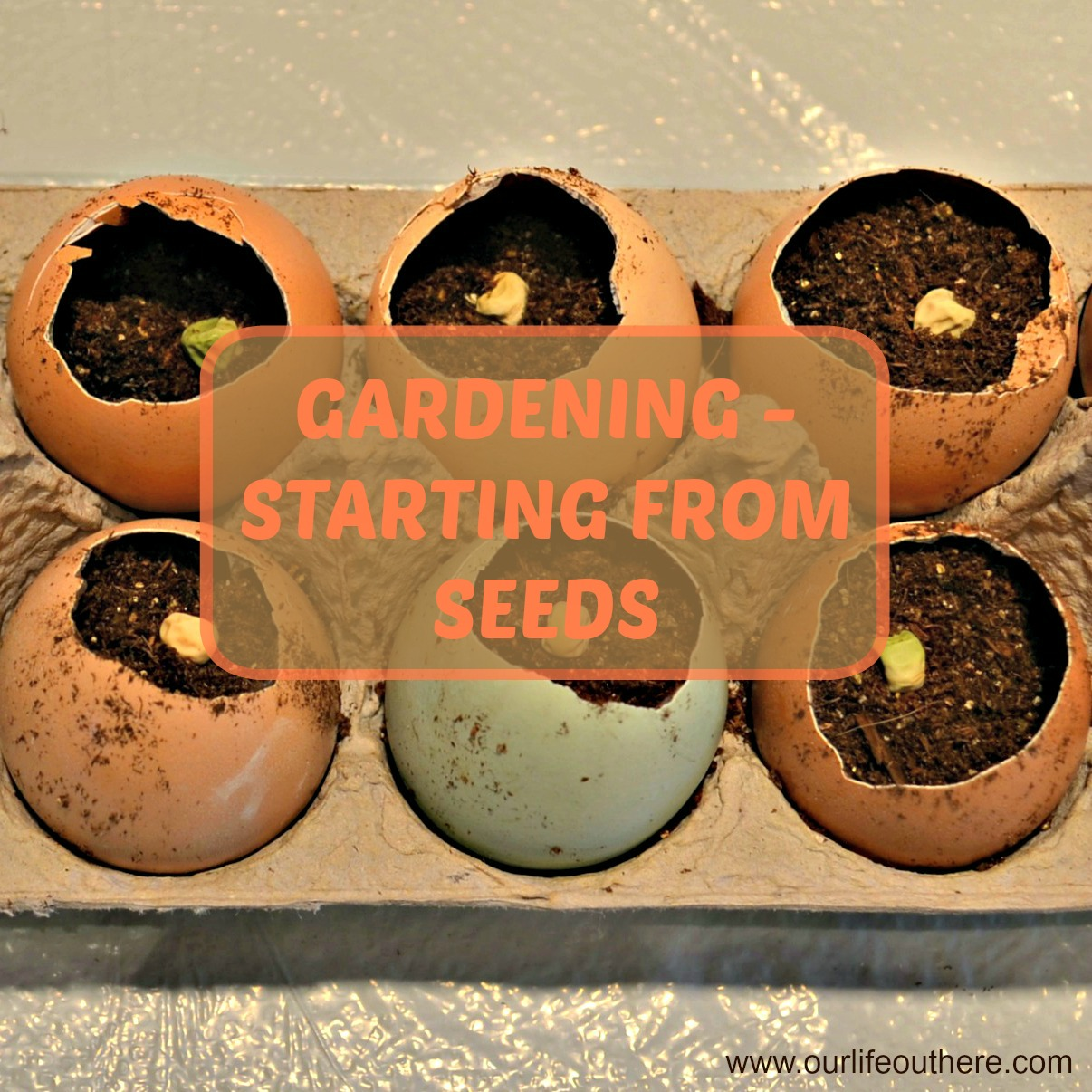 Enchanting What Gardening Zone Am I In By Zip Code Pictures - Brown ...