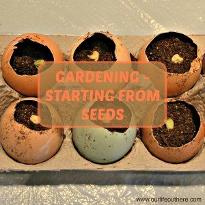 STARTING SEEDS FROM EGGSHELLS