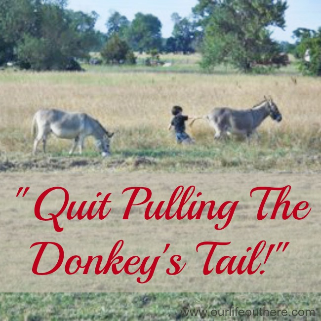 13 Things I never said before I had farm kids!  #farmlife #countrylife #farmkids www.ourlifeouthere.com
