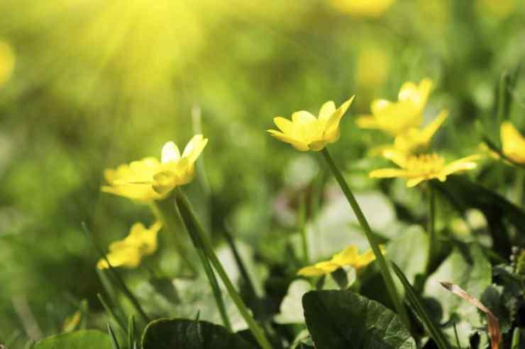 flowers-yellow