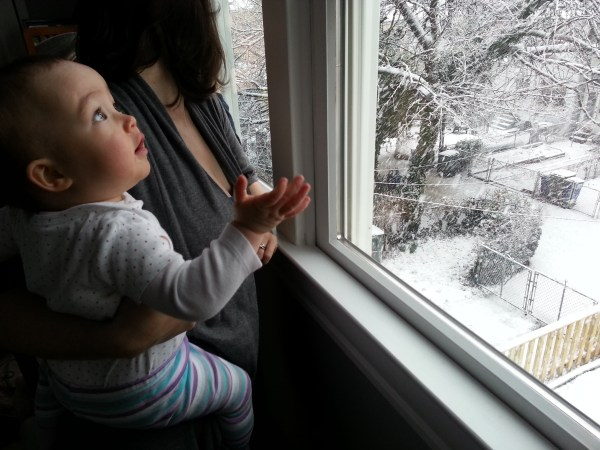 Lily watching the backyard snow