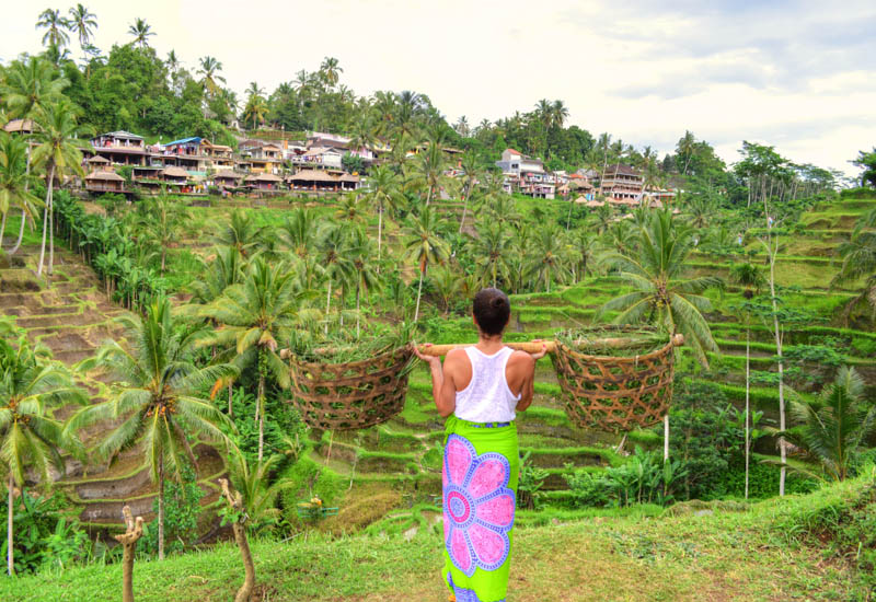 Ubud Tour: Top Things To See