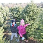 Cut-Your-Own Christmas Trees at Coward Farm