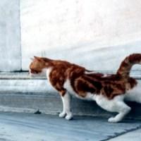 7 Tipps für Istanbul - Ein How To für Newbies wie mich