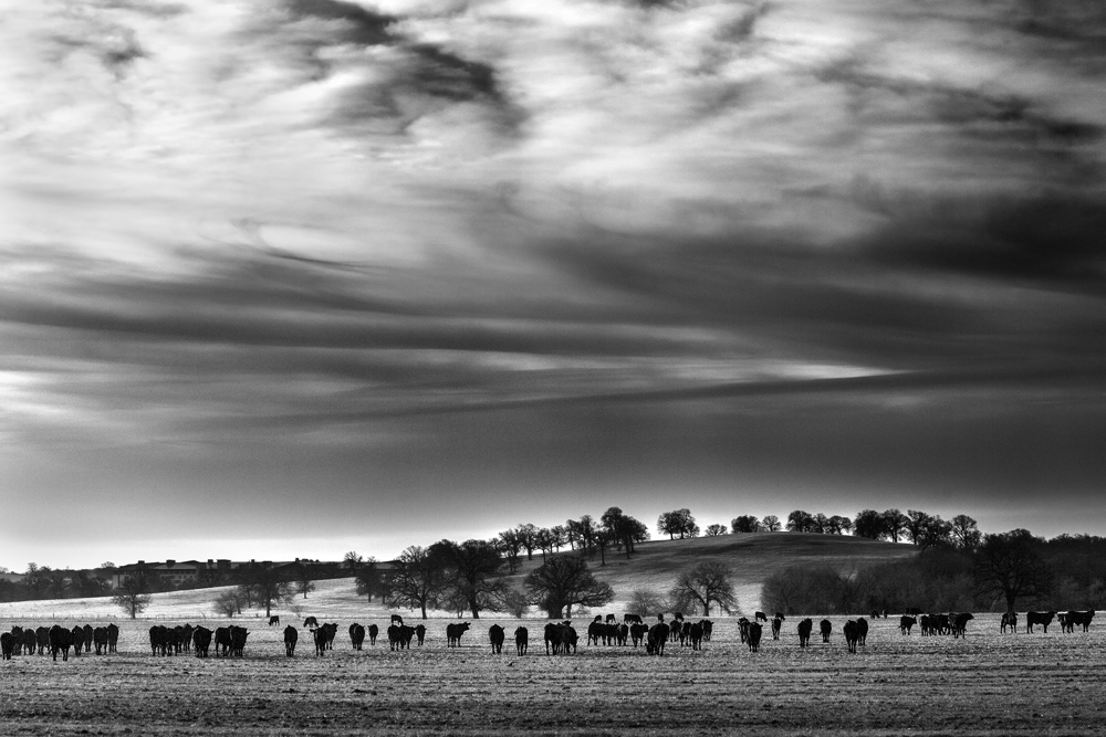 The Herd - Example of simple black and white photography