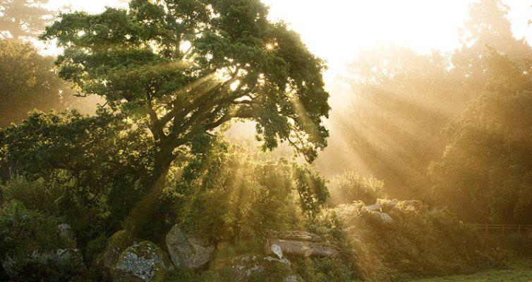 Tree Light_NO