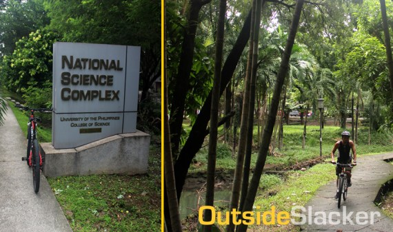 Grove in U.P Diliman National Science Complex