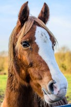 One of many horses kept on land adjacent to Titchfield Haven Nature Reserve which is under threat from developers wanting to build 160 houses