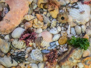 A collection of sea shells, seaweed, crustaceans, fossils, stones and sand from the shore line between Lee-on-the-Solent and Hill Head