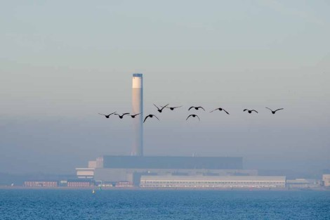 Canada Geese in formation with Fawley Power station as a back drop