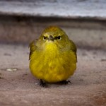 Finch Chick01 02-12-12 lo-res