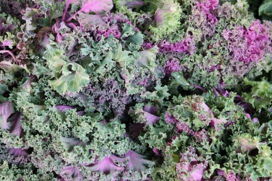And Purple Kale