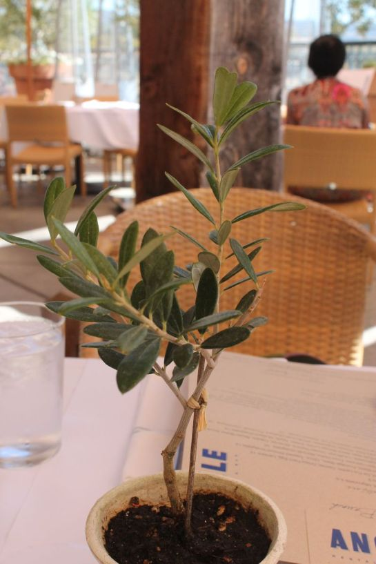 Mini Olive Tree Centerpiece