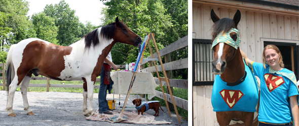 clicker training with painting pony