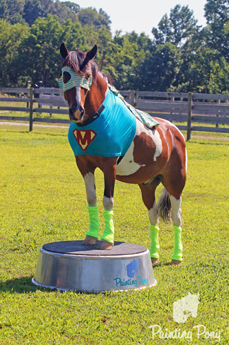Minnow the Super Hero Chincoteague Pony