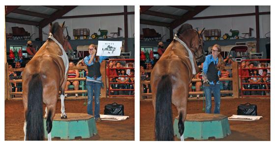 Pony Penning 2013 // Chincoteague Pony // Painting Pony