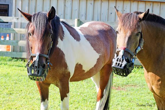 Greenguard USA Pony Muzzle Review with Painting Pony