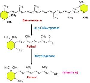 Beta Carotene to Retinol