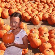 Palisades-Malibu YMCA Pumpkin Patch Opens on Saturday
