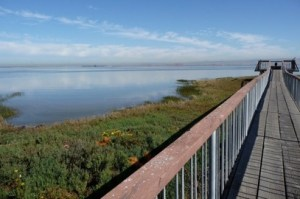 The Baylands offers unparalleled views and a chance to stroll and unwind. Photo by Trailstompers.