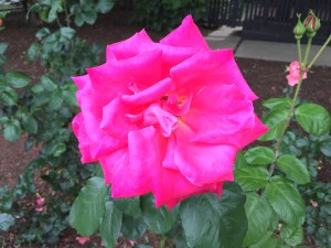 flowers bloom almost all year long in Palo Alto.