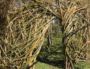 An arch is emerging in Patrick Doughtery's new sculpture. Photo by Palo Alto Pulse.