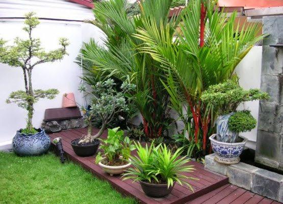 taman depan rumah minimalis lahan kecil desain gambar