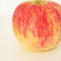 Pommes, lesquelles, pourquoi , en quelle saison?