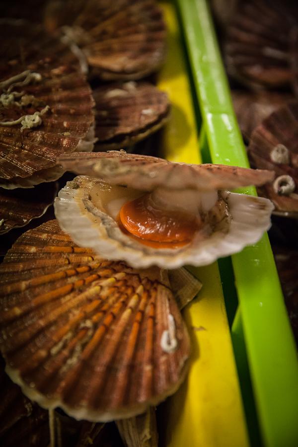 Panier de saison saint jacques en sabayon de moutarde - Cuisiner le corail des coquilles saint jacques ...