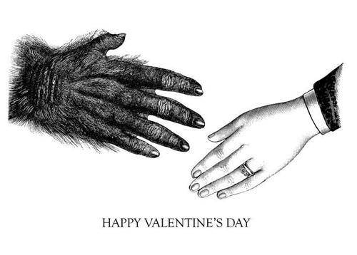 Frantic Meerkat Valentine's Day Cards