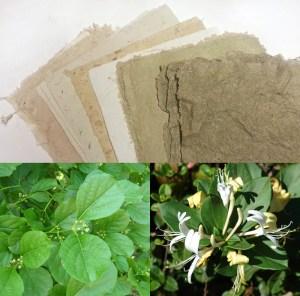 Invasive plant papers