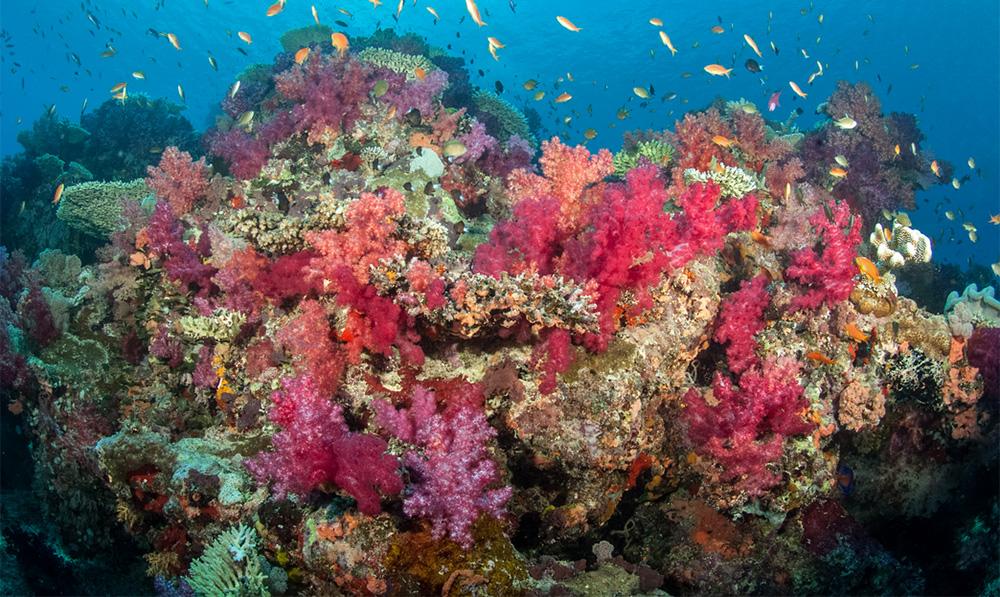 Paradise Taveuni - Beautiful Soft Corals