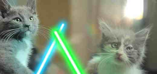 Chatons et sabres-laser