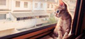 30 chats mélancoliques qui attendent leur maître…