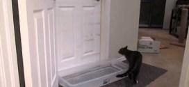 Vidéo : un chat ouvre les portes, même les piégées!