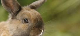 Un lapin fait fuir les cambrioleurs