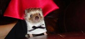 25 animaux déguisés pour Halloween et terriblement mignons