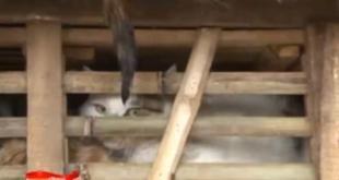 Vietnam : saisie d'une cargaison de chats destinés aux restaurants