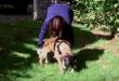 Vidéo. Un chien destiné à être mangé voit de l'herbe pour la première fois, après des années en cage