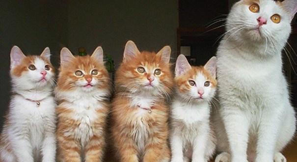 30 mamans chats très fières de vous présenter leurs petits !
