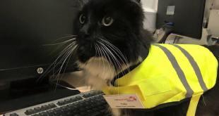 Une gare anglaise emploie un chat et vient de lui accorder une promotion
