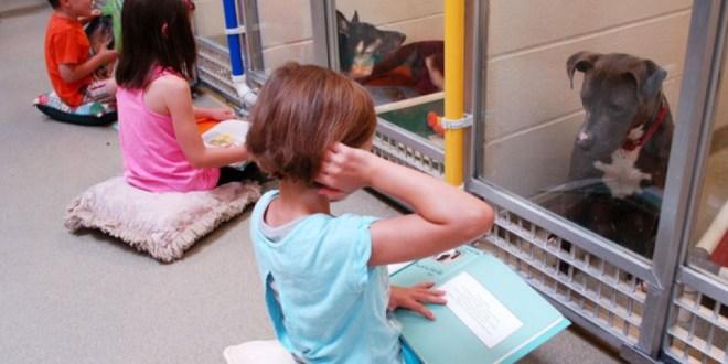 Des enfants font la lecture aux chiens dans les refuges pour les préparer à la sortie