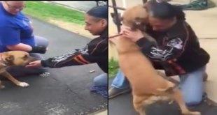 Vidéo. Un homme retrouve son chien volé après 2 ans de séparation