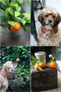 Tangerines & Coco