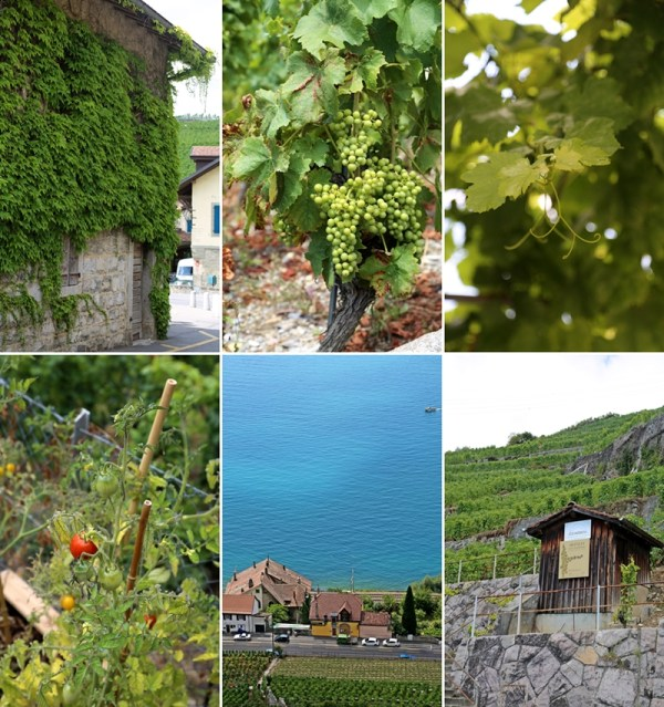 Lavoux Vineyards, Switzerland, SwissMade GrandTours