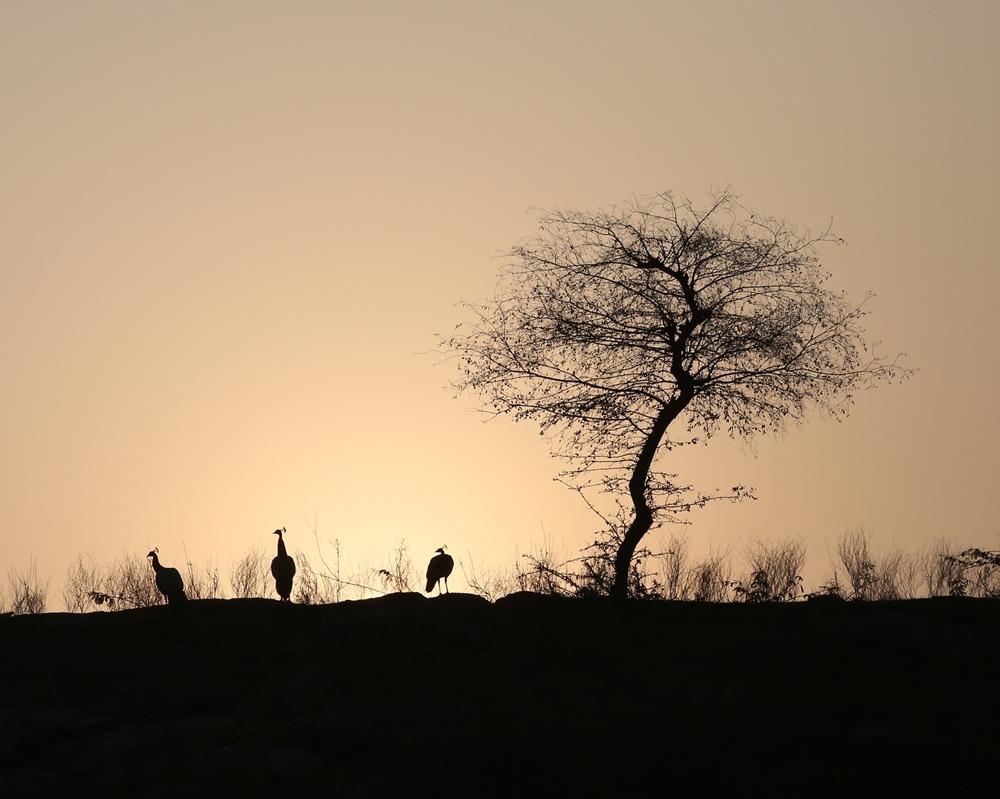 Sunrise, Lakshman Sagar, Raipur