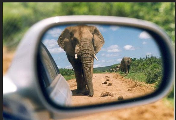 elephant in mirror
