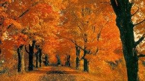 foto_autunno