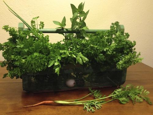 Fresh parsley  + mint make the best tabouleh.